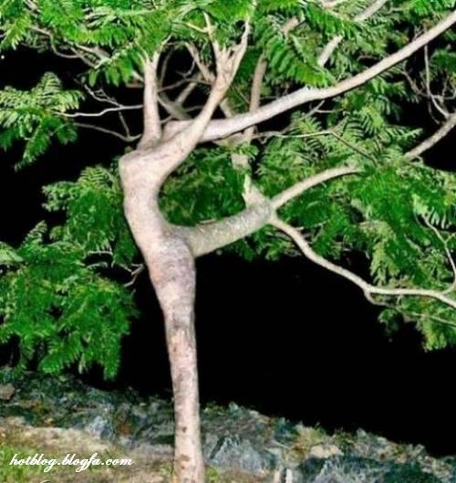 [تصویر:  strange-trees01.jpg]